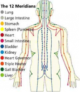 the 12 meridians